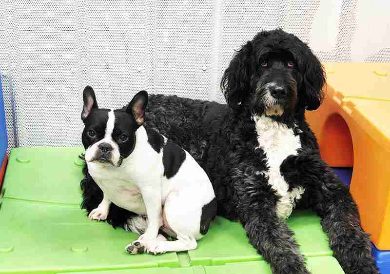 doggy-daycare-maumee-stars-22