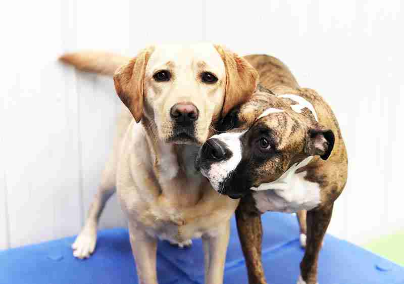 doggy-daycare-maumee-stars-23