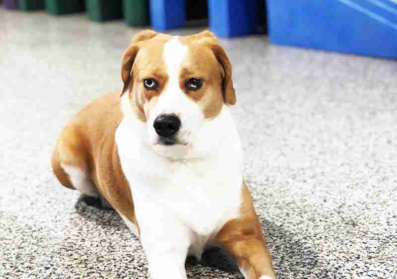 doggy-daycare-maumee-stars-27