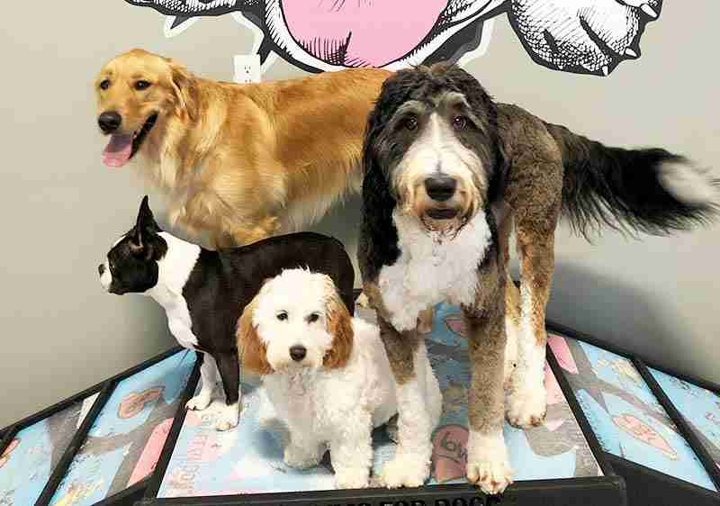 Group doggy daycare Maumee, OH