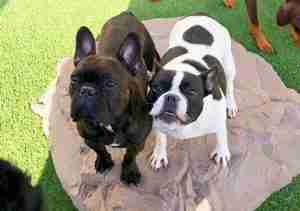 Doggy Daycare Toledo Area