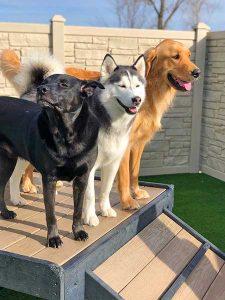 Karnik On Black Doggy Daycare Maumee