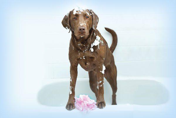 Dog Grooming Maumee, Ohio