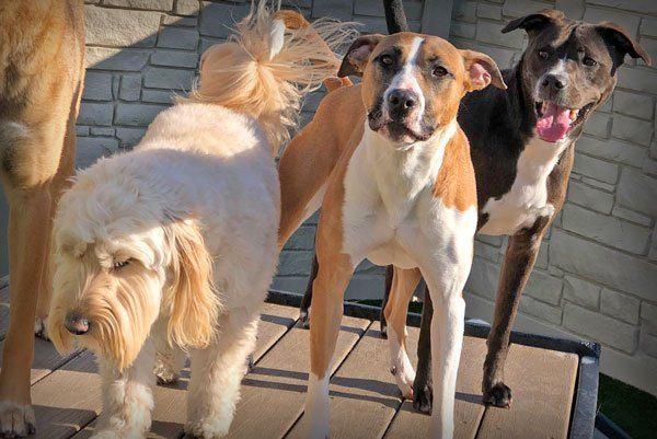 home-doggy-daycare-maumee_thumb